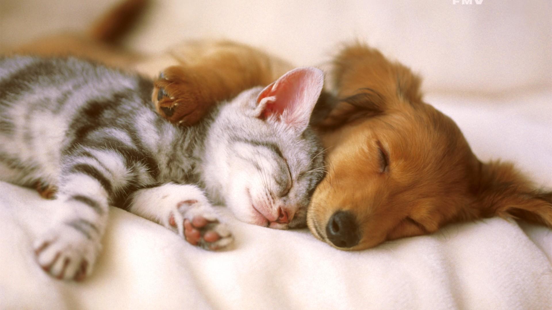 Seppellire cane gatto - Arezzo Pet Service