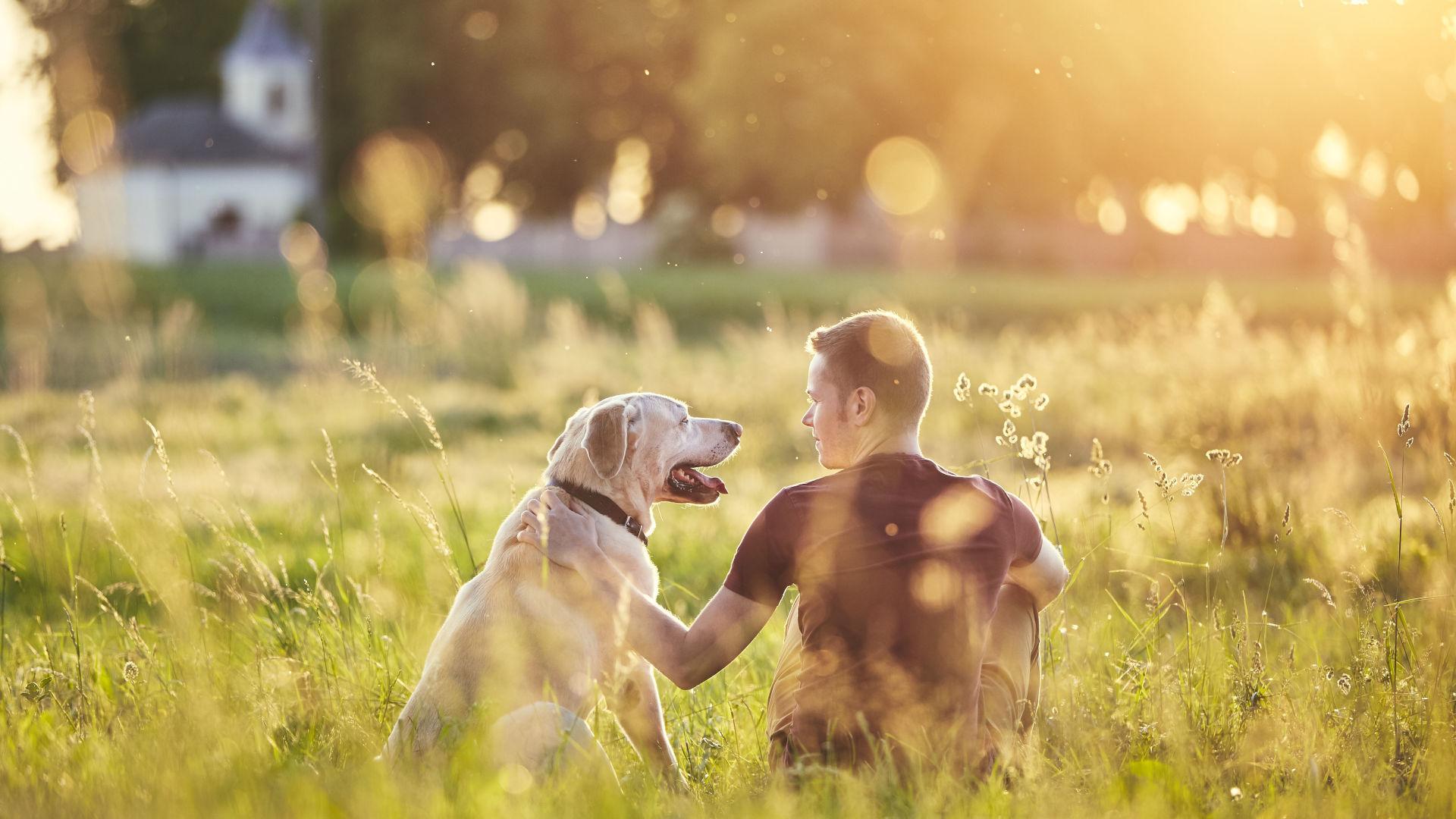labrador - Arezzo Pet Service